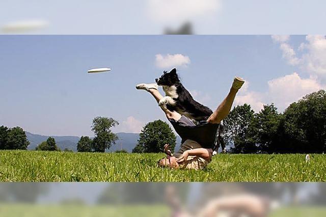 Hundefrisbee im Dreisamtal