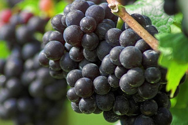 Erfolgsbilanz für badische Weinerzeuger