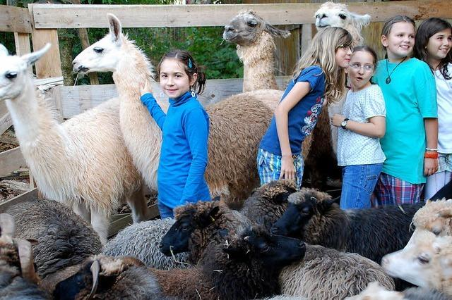 Schweinchen-Geschichten im Lama-Stall