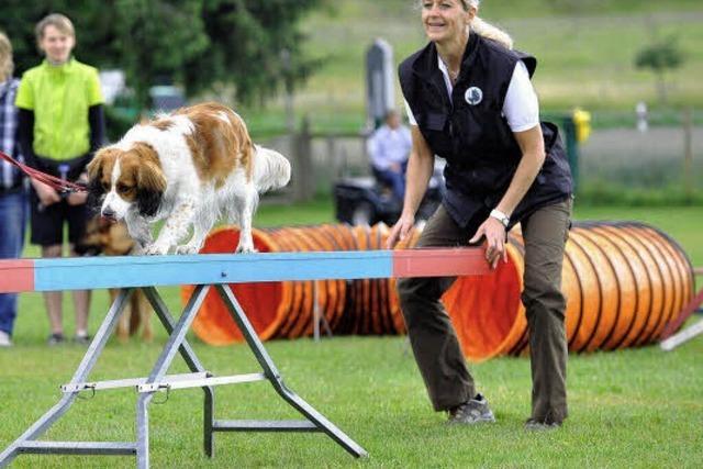 Hindernislauf für Hunde
