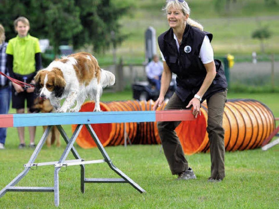 Immer weiter balancieren – auch ... macht Hunden (und ihren Haltern) Mut.    Foto: Eggstein Rita
