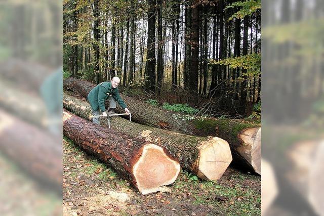 Holz könnte bald knapp werden