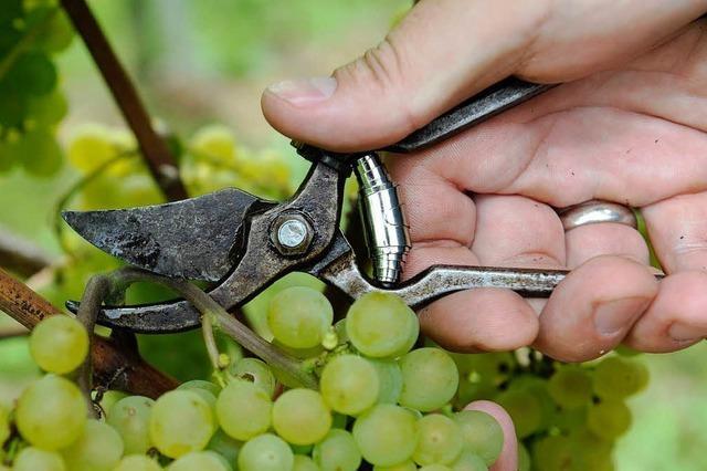 Südbadens Landwirte mit Ernte zufrieden