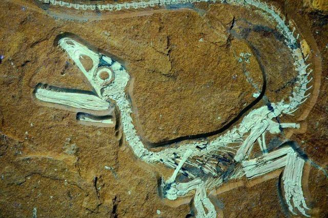 Baby-Dinosaurier bei München gefunden
