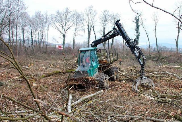 Bürgerinitiative lehnt Querdamm im Rheinwald weiter ab