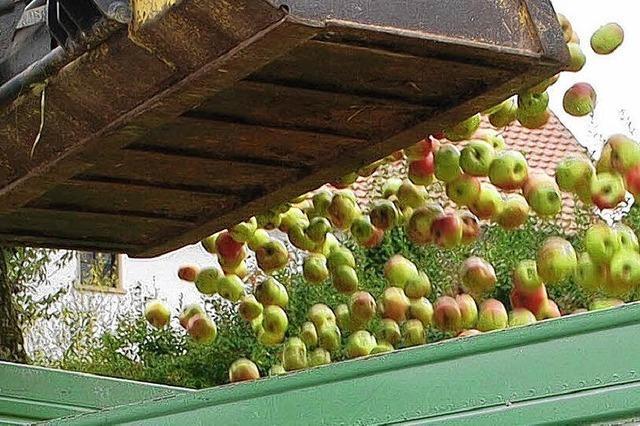 BUND-Apfelaktion fährt reiche Ernte ein