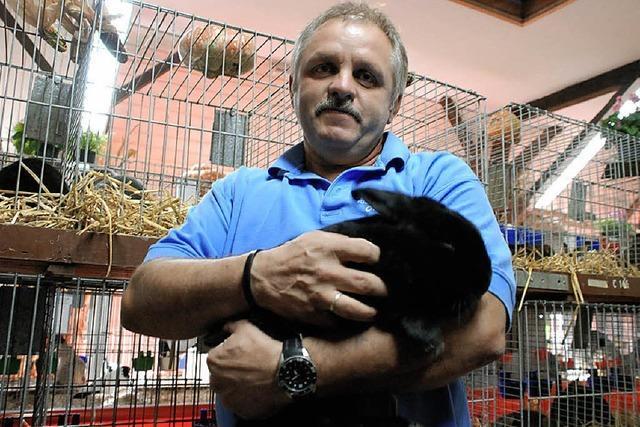 Warzenenten, Satin-Kaninchen und Hasenpfeffer