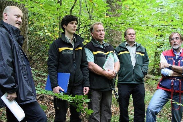 Waldbegehung des Gemeinderats: Mehr Laubbäume als früher