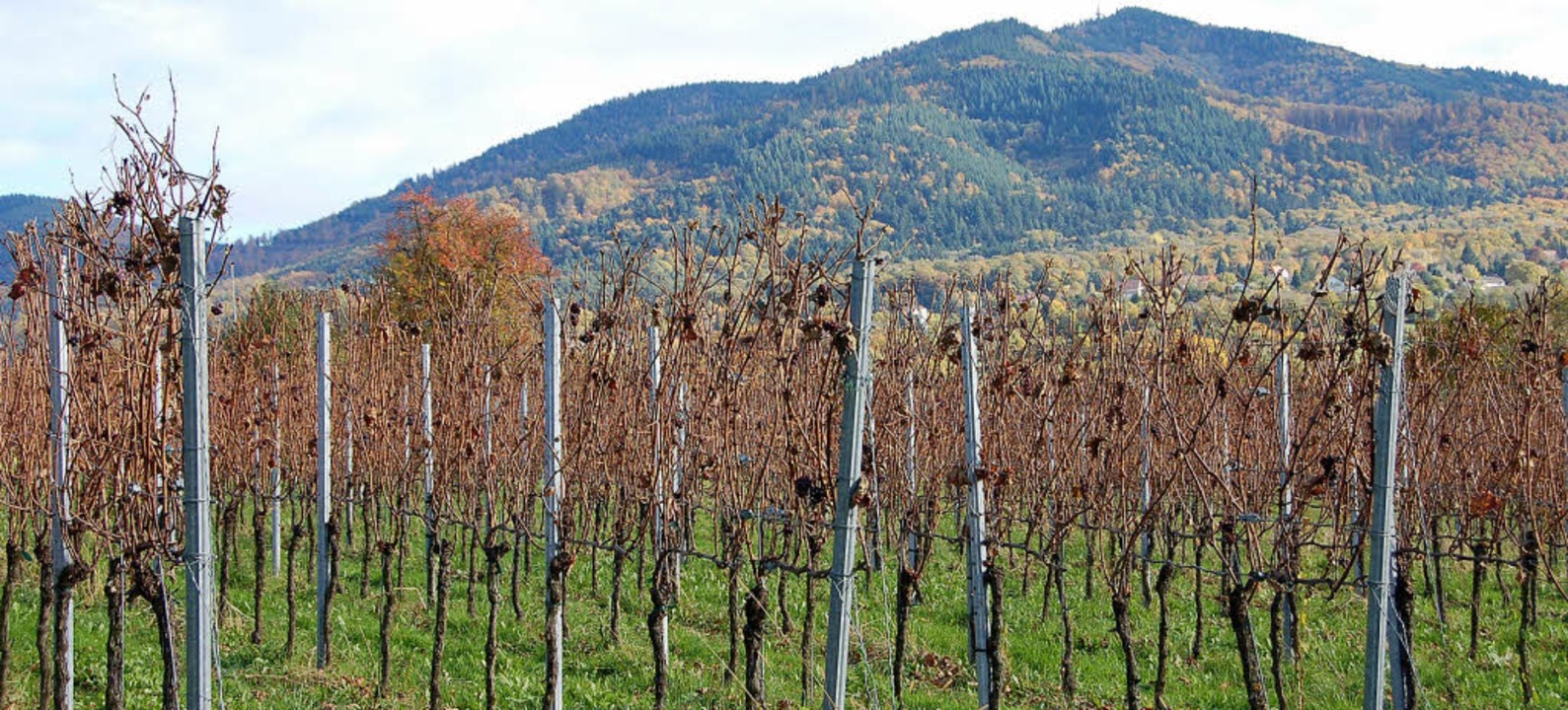 Im goldenen Oktober ist die herbstlich...n Niederweiler –  fast beendet.   | Foto: Umiger