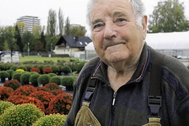 Gold für Karl Bräutigams Chrysanthemen