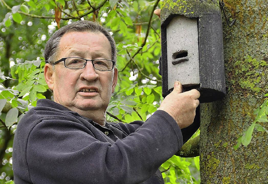 Naturschützer und Altgemeinderat Hans ...rade eine Unterkunft für Fledermäuse.   | Foto: Dieter Erggelet