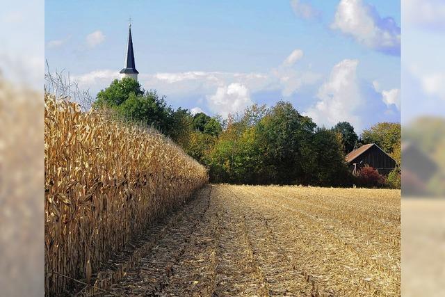 Freiburg geht beim ökologischen Ausgleich neue Wege