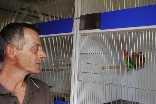 Ausgezeichnete Liebesvögel