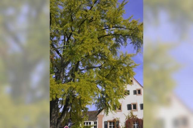 Ein Baum wie aus einer anderen Zeit