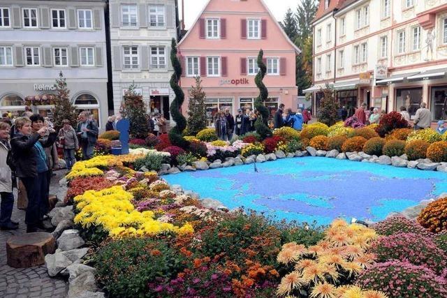 Fotos: Impressionen von der Lahrer Chrysanthema (II)