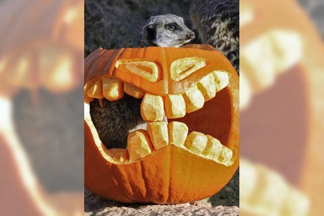 Amerikaner feiern Halloween immer aufwändiger