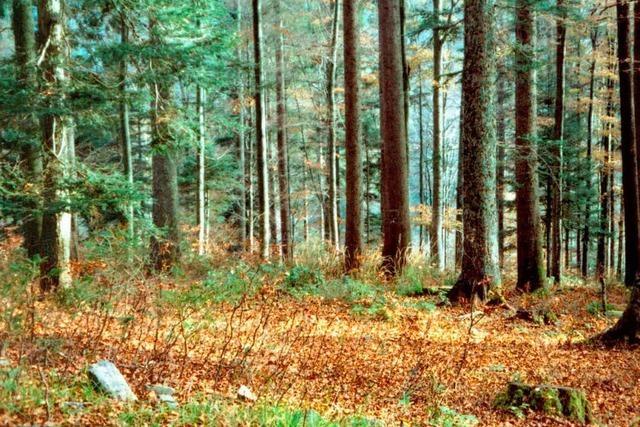 Der Wald als Friedhof ist zur Normalität geworden