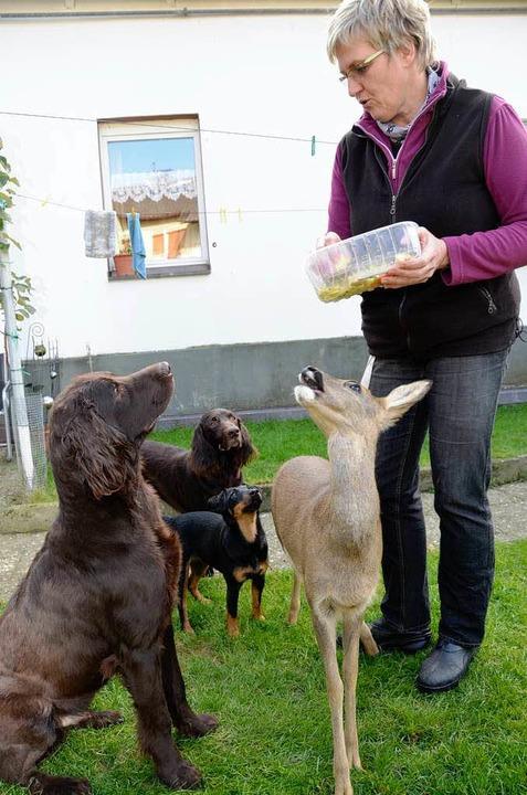 Durchsetzungsstark: Bambi frisst, Aiko (links)  schaut sehnsüchtig zu.   | Foto: kaiser