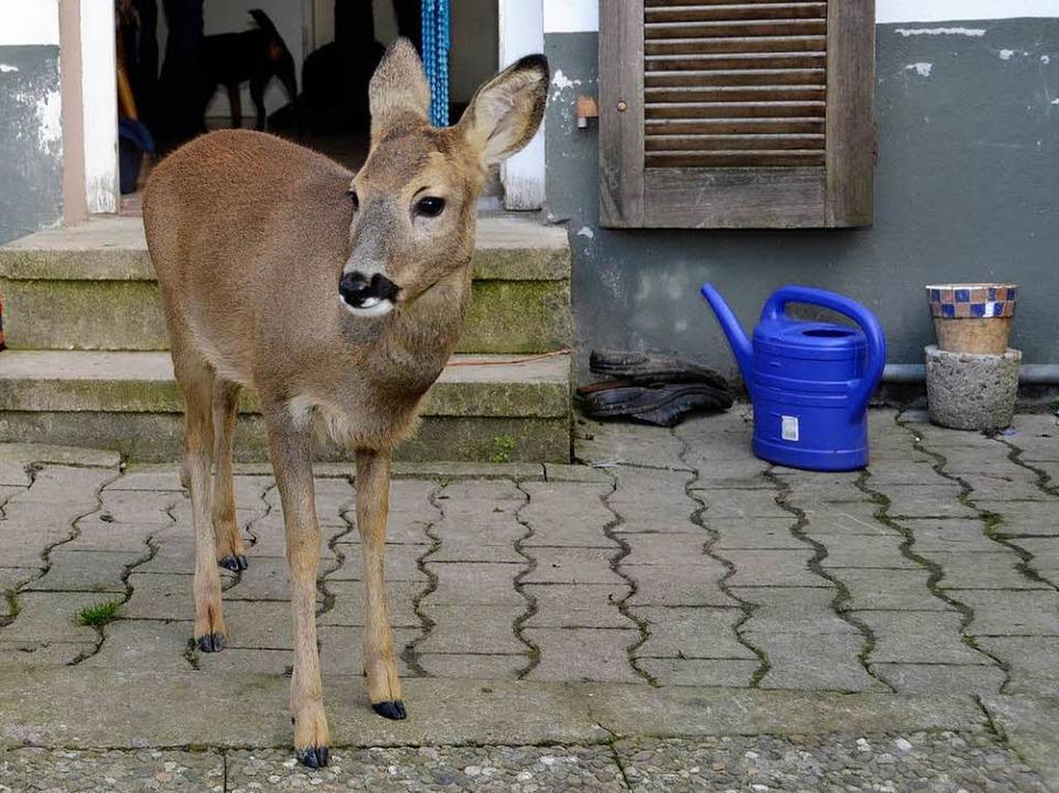 Bambi vor seiner Wohnungstür.  | Foto: Sebastian Kaiser