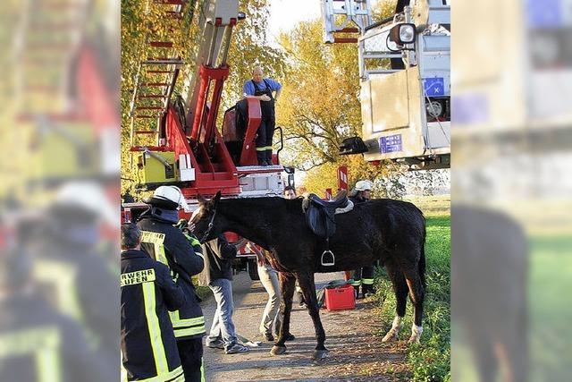 Pferd landet in Bachbett - Feuerwehr hilft