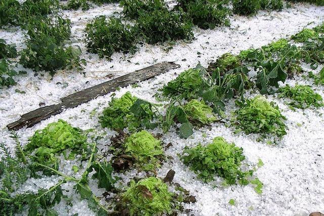 Hungersnot 1817 - Schnee und Hagel vernichten Ernte