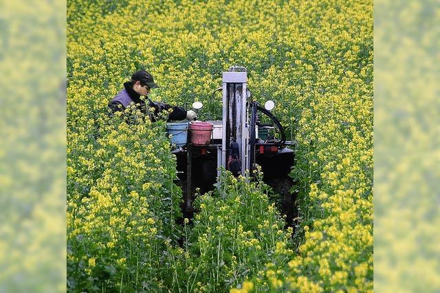 Nitratwert sinkt langsam, aber sicher