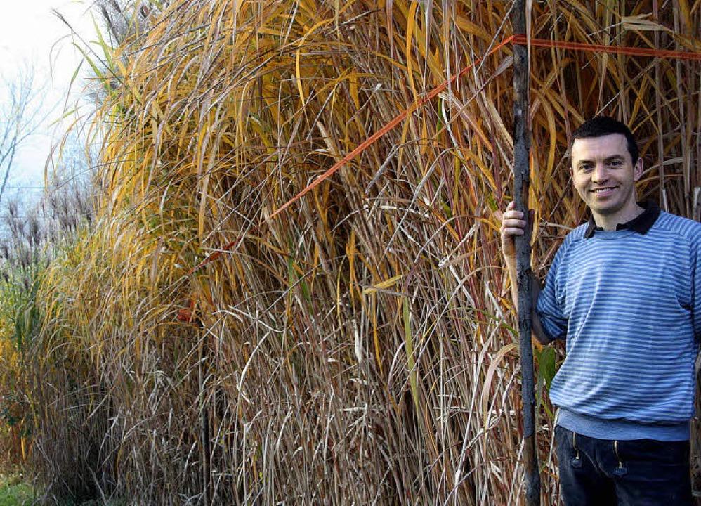 Johannes Rösch vor einer Mescantus-Kul...ge Biomasse, die sich verheizen lässt.  | Foto: Silvia Faller