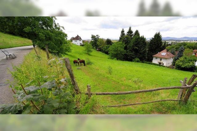 Pferdewiese: Rathaus will grünes Licht geben - Einwände des Bürgervereins