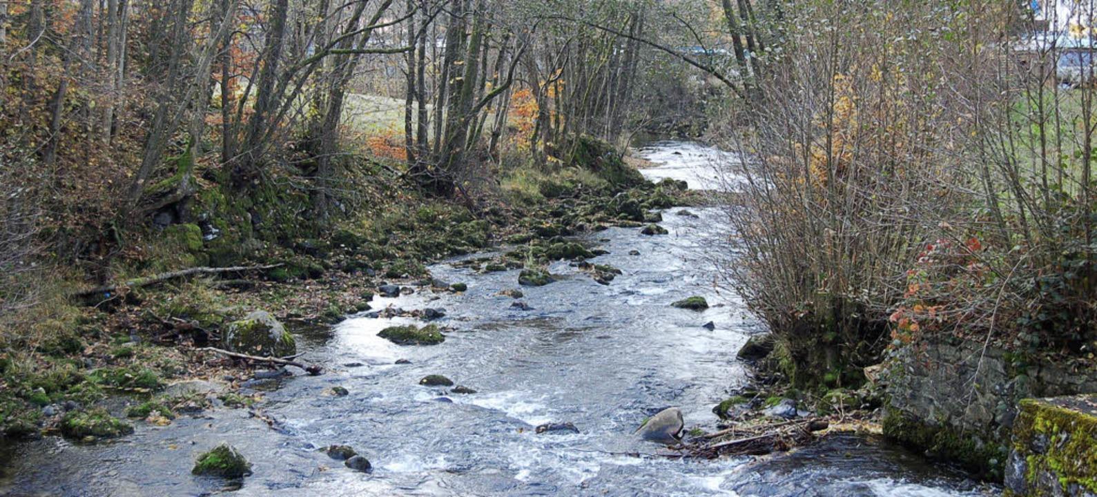 Das Wiese-Ufer in Schönau wurde unläng...r verschiedene Grundstückseigentümer.     Foto: Ulrike Jäger