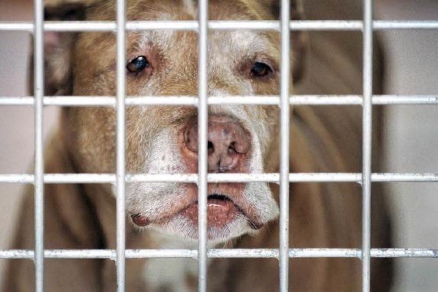 Die Aargauer stimmen über den Hundeführerschein ab