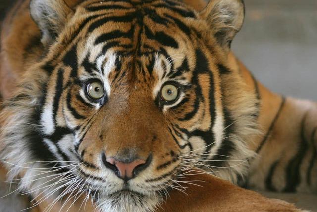 Bundesländer für Wildtierverbot im Zirkus