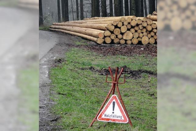 Ein gutes Jahr für den Forst