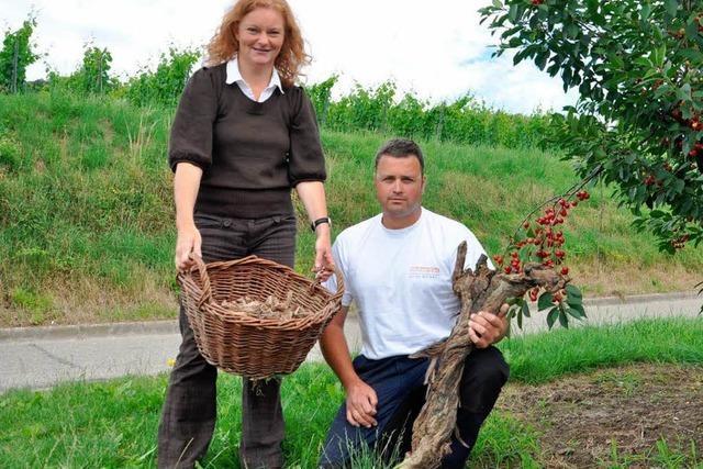 Biokohle aus dem Weinberg