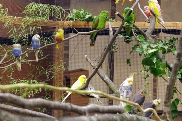 Schöne bunte Vogelwelt