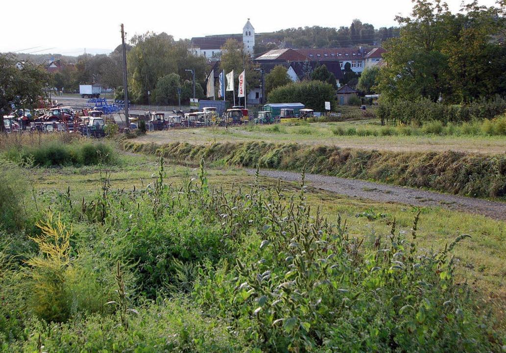 Auf diesem Gelände bei Gottenheim soll ein Netto-Einkaufsmarkt gebaut werden.   | Foto: manfred frietsch