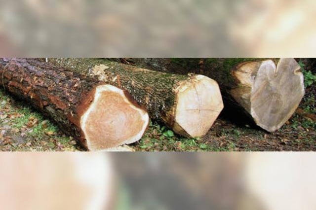 31 000 Euro Gewinn im Gemeindewald