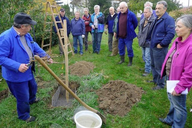180 Bäume bereichern die Binzger Feldflur