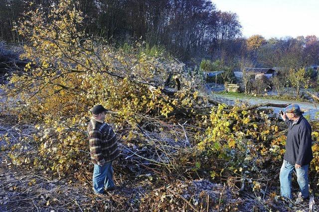 VAG-Baustelle: Schrebergarten-Areal versehentlich gerodet