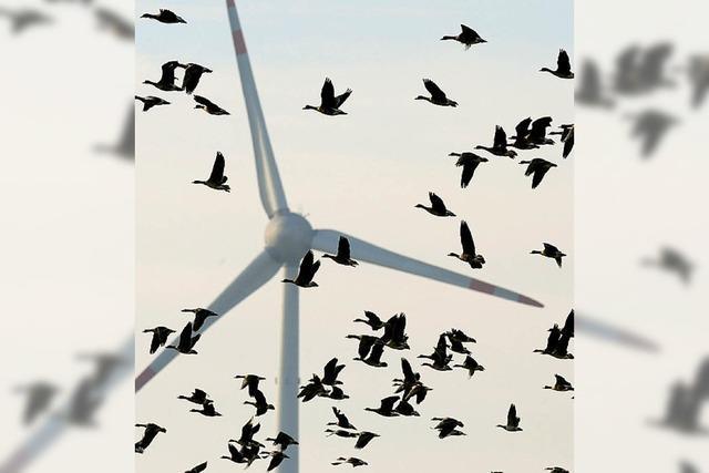 Windkraft ja, aber nicht irgendwo