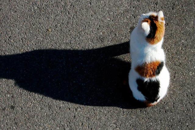 Die Katze ist das liebste Haustier