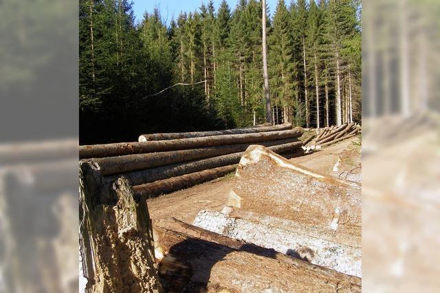 Wald bringt mehr Geld als erwartet