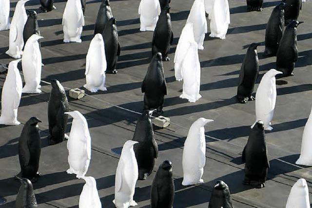 Eine Pinguin-Kolonie mitten in Bernau