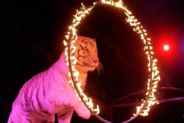 Wildtiere sollen aus dem Zirkus