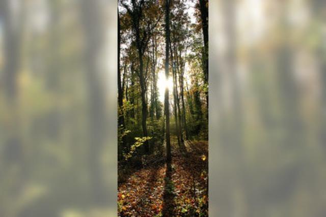 Ein Superjahr für den Oberrieder Wald