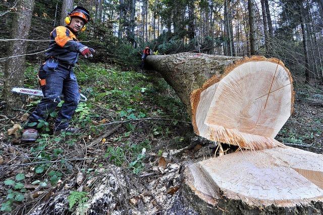 Die Holzmacher vom Stadtwald