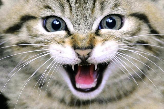 Gentests beweisen: Die Wildkatze ist zurück