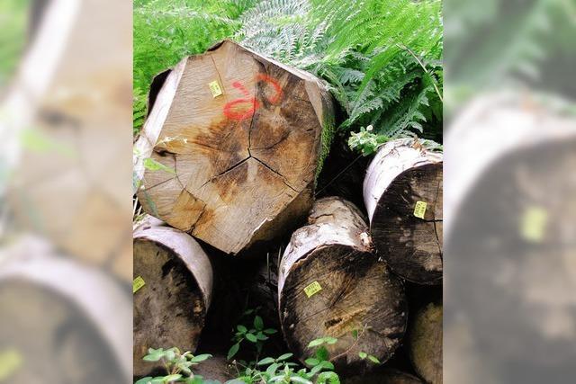 Wald soll 2012 wieder ein Plus bringen