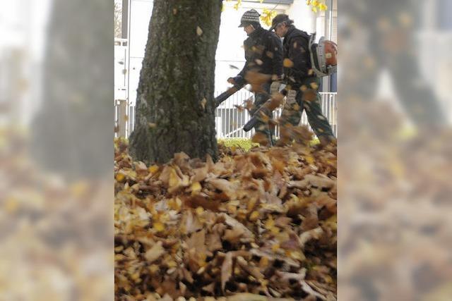 Der meteorologische Herbst hat Schwörstadt Rekorde beschert