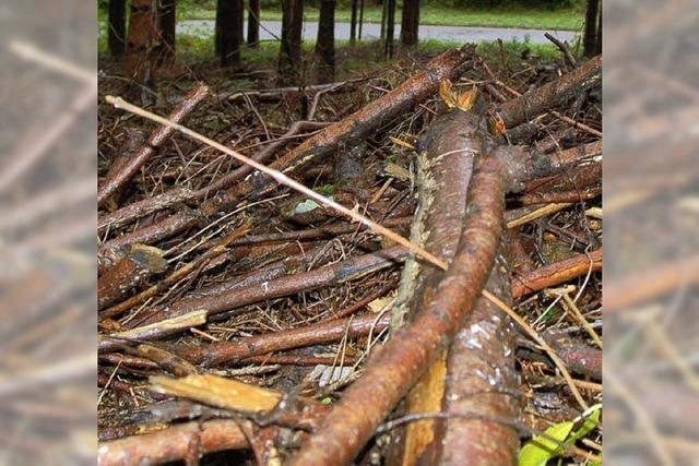 Der Wald hat viele Funktionen