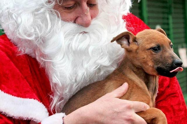 Grüne: Tiere als Weihnachtsgeschenke ungeeignet
